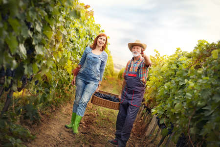 Cheerful senior man with young woman carrying baskets full of freshly picked up wine grapes on the vineyard, harvesting fresh crop. Family business concept Archivio Fotografico