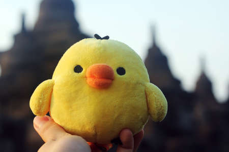 soft toy: cute little yellow chicken soft toy