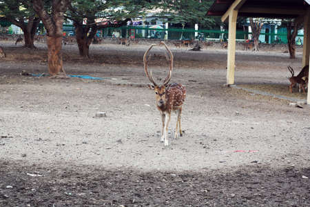 prambanan: cute deer at Prambanan deer garden