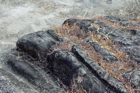 weeds: weeds grow from rock