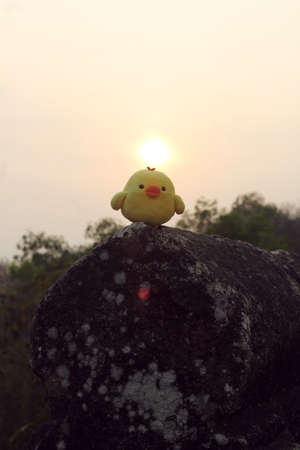 soft toy: little yellow chicken soft toy and sunrise