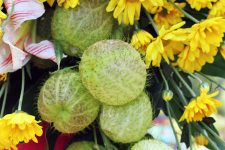 Yellow flower and green ball shape of plant stock photo picture and stock photo yellow flower and green ball shape of plant mightylinksfo