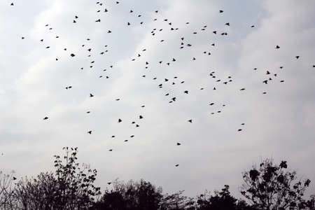 migrate: a group of birds fly in the sky