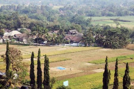 ariel: overlook of green field in yogyakarta