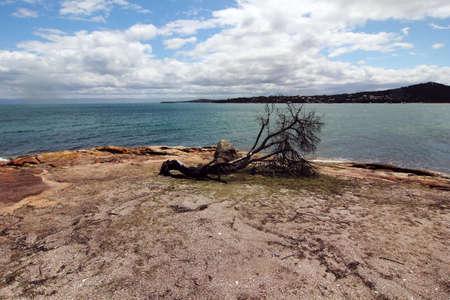 tasmania: landscape at Honeymoon Bay, Tasmania