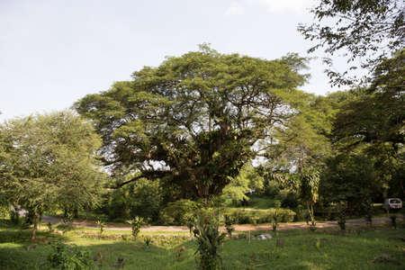 Großer grüner Sommerbaum Standard-Bild - 71317009