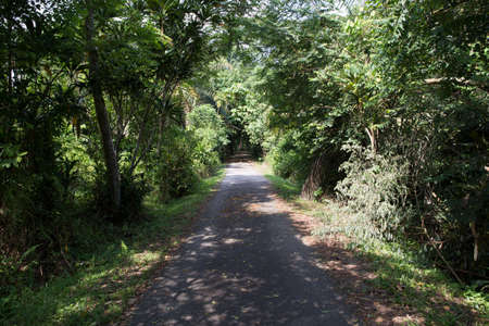 quiet countryside trail with tree shade