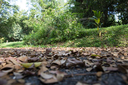 fallen leaves on the ground