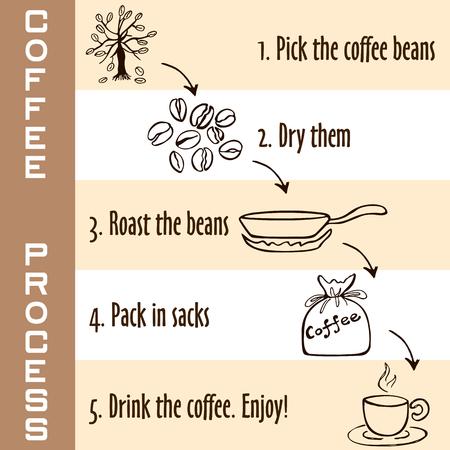 proceso: Dibujado a mano los pasos del proceso de café en colores marrón, brote joven de café para beber café caliente, estilo de dibujo sobre fondo blanco y beige Vectores