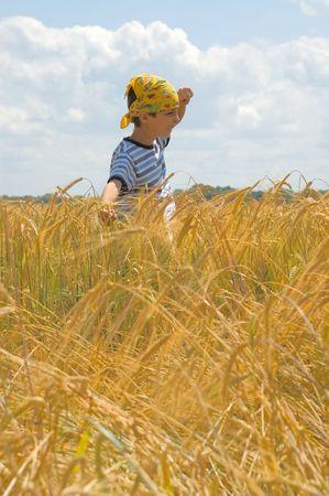joyfull: Happy In Golden Harvest