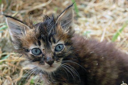 perro asustado: Malos Stray Kitten Foto de archivo