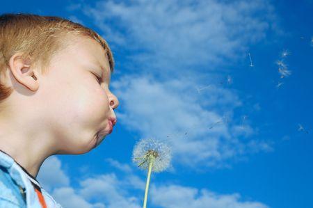 dandelion wishing photo