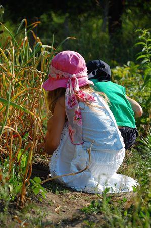 children squat in the garden looking for berries photo
