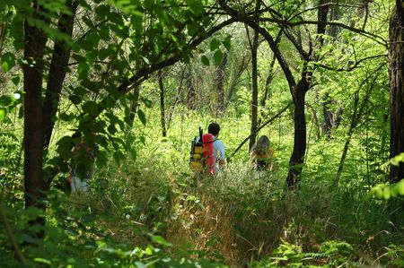 underbrush: family hiking through the jungle and high underbrush Stock Photo