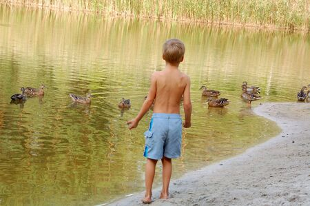 reflaction: little boy standing on the pond bank and watching wild ducks