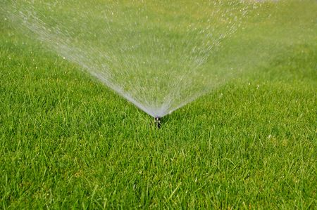 grass plot: sprinkler watering the green grass on a sunny summer day