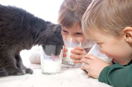 2 children and pet cat drink milk from glasses photo