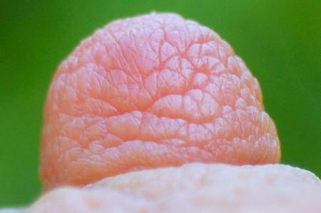 close-up shot of a female breast nipple Stock Photo - 7146562