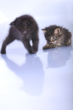 close-up portrait of two  kittens playing together photo