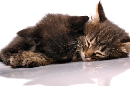close-up portrait of two  kittens sleeping together photo