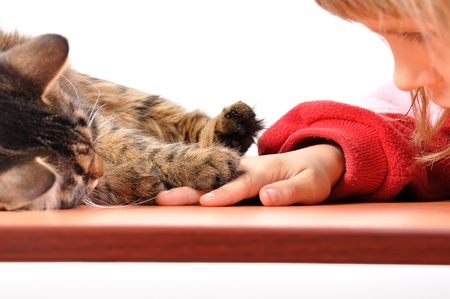 cat head: cat and child playing together touching paw and hand
