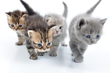 작은 3 주 된 새끼 고양이의 그룹을 향해 걷기