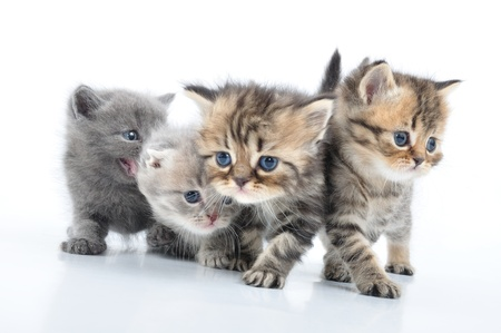 group of small 1 month old kittens walking towards photo