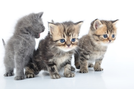 group of small 1 month old kittens  photo