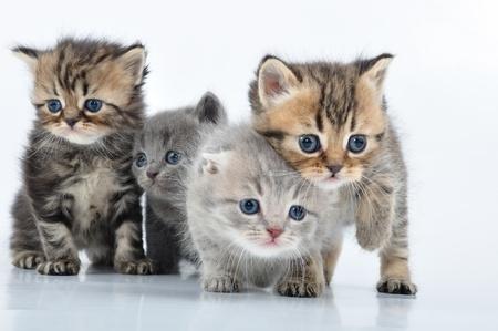 gato jugando: grupo de pequeños gatitos 3 semanas de edad, caminando hacia Foto de archivo