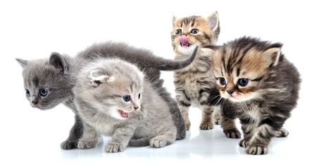 group of small 1 month old kittens walking towards Stock Photo - 12847877