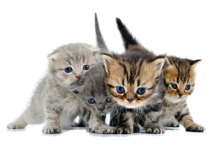 group of small 3 weeks old kittens walking towards photo