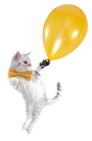 cat kitten silver tabby with a bow tie flying with a golden balloon