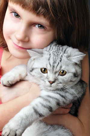 child hugging silver white purebred Scottish young cat kitten