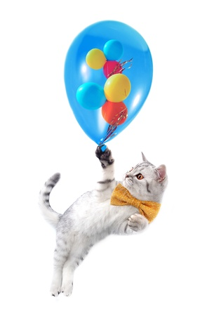 cat kitten with bow tie and colorful balloons