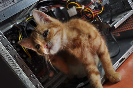comp: young red kitten against open computer inside