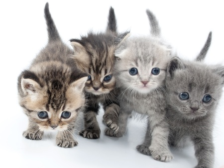 four kittens walking together Stock Photo
