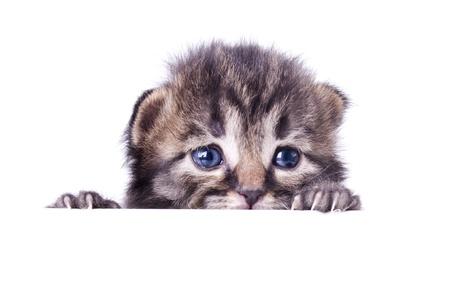 Studio portrait of a cute little 14 days old kitten hiding.