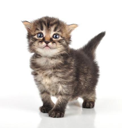 美しいのかわいい 20 日間の古い小さな子猫立っています。