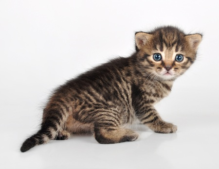 tabby cat: beautiful cute  small kitten sitting and looking back Stock Photo