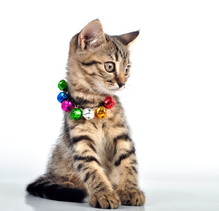 mewing: Cute small  witten with a necklace. Studio shot. Stock Photo