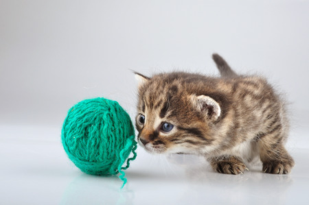 miaul: Little kitten playing with a woolball   Studio shot  Stock Photo