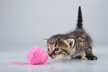 mewing: Little kitten playing with a woolball   Studio shot  Stock Photo