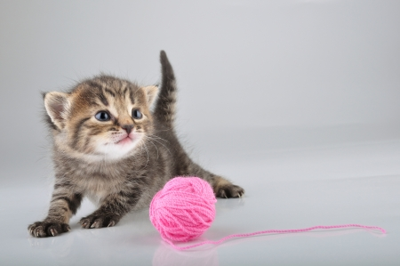 Little kitten playing with a woolball   Studio shot  photo