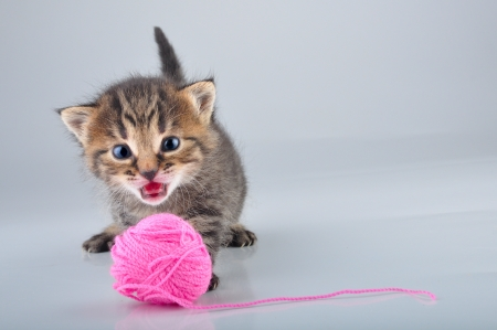 mewing: Little kitten playing with a woolball . Studio shot.