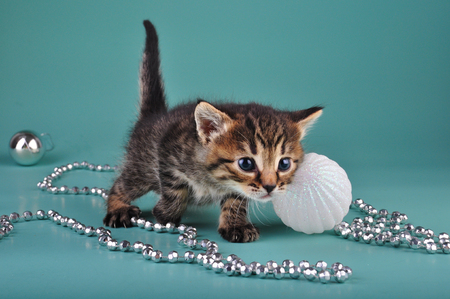 mewing: Small  kitten among Christmas stuff . Studio shot. Stock Photo