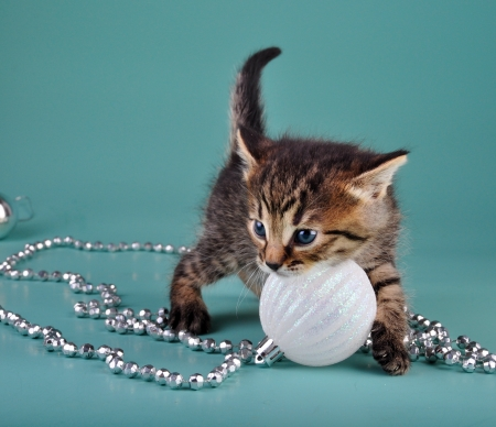 mewing: Cute little kitten playing with white Christmas ball   Studio shot  Stock Photo