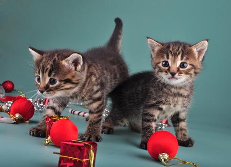 mewing: Small  kittens among Christmas stuff   Studio shot  Stock Photo