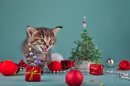 Cute little kitten wearing a jingle bells necklace among handmade Christmas stuff   beads fur-tree, balls and presents  Studio shot