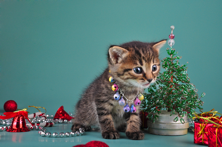 christmas pussy: Cute little kitten wearing a jingle bells necklace among handmade Christmas stuff   beads fur-tree, balls and presents  Studio shot