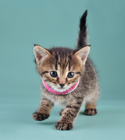 miaul: Studio portrait of little kitten with Indian bracelets . Studio shot. Stock Photo